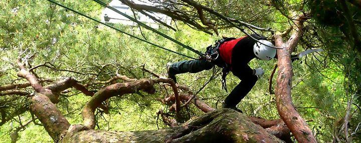 Fäll- und Schnittverbote bei der Baum- und Gehölzpflege