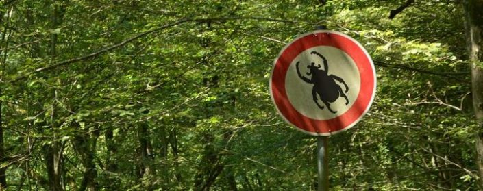 Verbotsschild mit einem symbolisierten Insekt im Wald