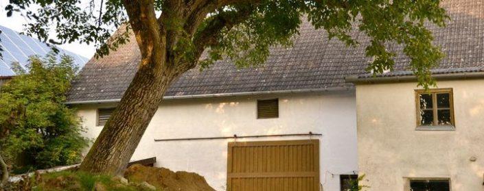 Schräger Stamm eines Walnussbaumes