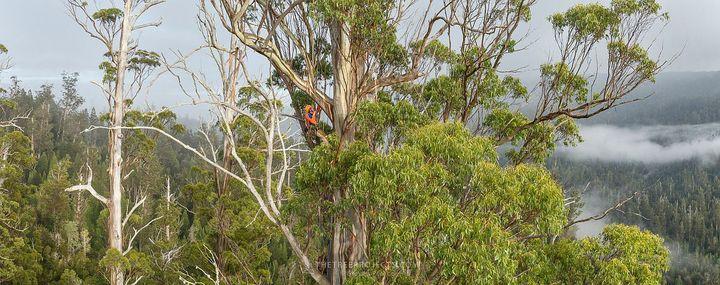 Tasmanian Tree Project