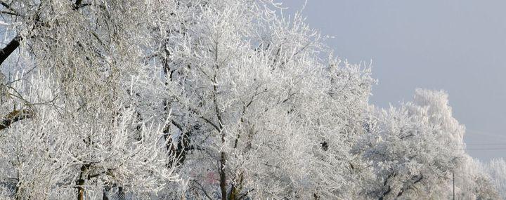 An den Zweigen und Ästen von Bäumen hängt Reif