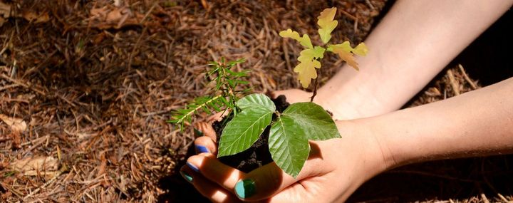 Baum pflanzen: So geht's richtig