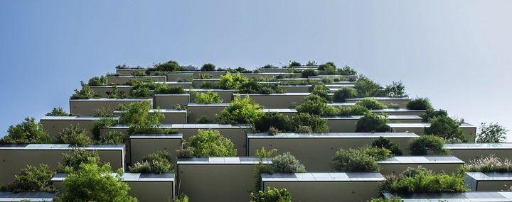 Keine Bäume auf Balkonien?