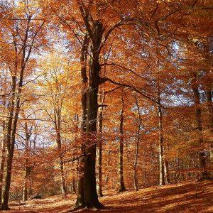 Herbstlicher Laubwald