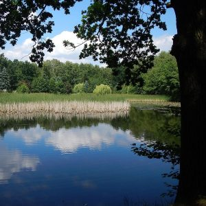 See mit viel Schilf zwischen Wäldern