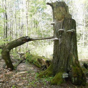 Alter zerbrochener Baum