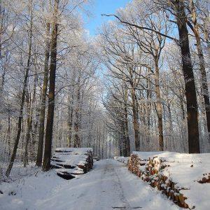 Winterliche Waldstraße mit Holzpoltern