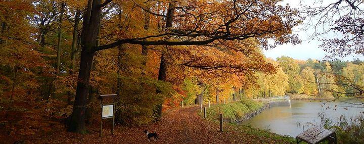 Weg entlang eines Teiches im Wald
