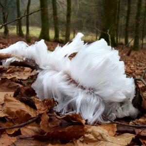 An einem Ast wachsen feine weiße Eisfäden
