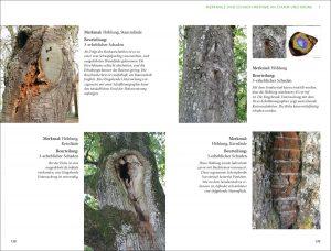 Beispielseite aus dem Buch Praxis Baumkontrolle