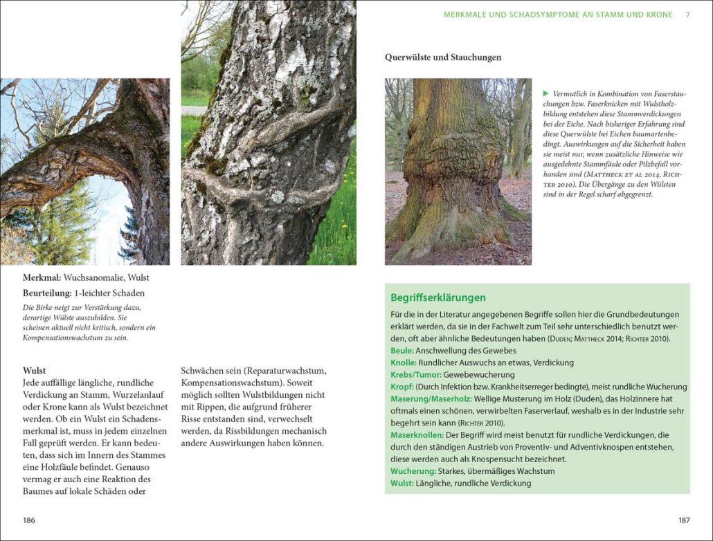 Peter Klug: Praxis Baumkontrolle / Baumkataster– Baumpflegeportal