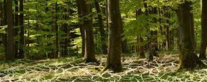 Wald mit symbolisierten Geflecht im Waldboden