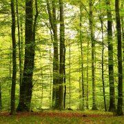 Lichter Laubmischwald