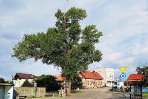 Baum an einer Verkehrskreuzung in der Ortschaft