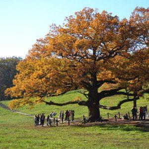 Eiche im Herbstlaub umgeben von Menschen