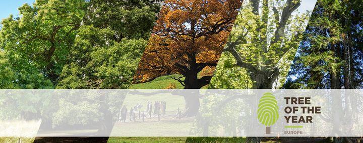 Verschieden alte, mächtige oder knorrige Bäume