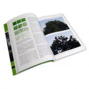 Beispielseite aus dem Buches Vitalitätsbeurteilung von Bäumen