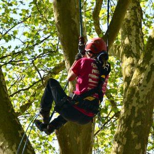 Eine Frau klettert an einem Seil auf einen Baum