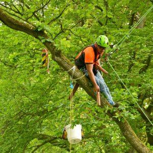 Ein Kletterer sitzt auf einem Ast mit einem Stock in der Hand