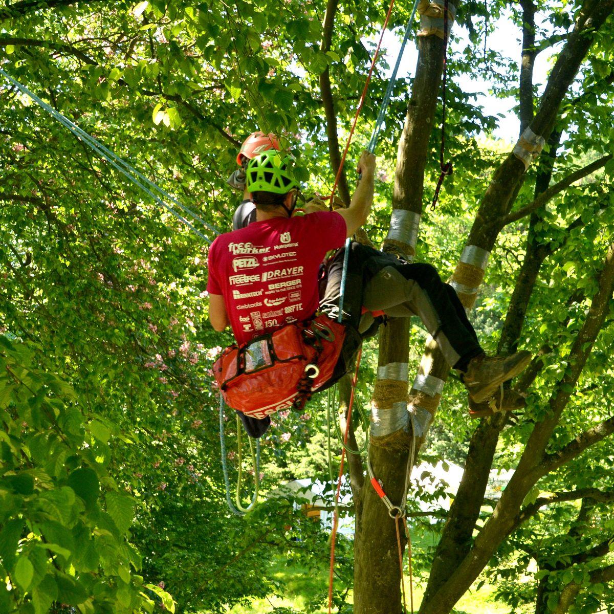 Baumkletter-Meisterschaften: Disziplin Areal Rescue