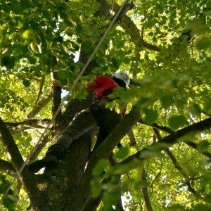 Ein Mann klettert an einem Baumstamm nach oben,