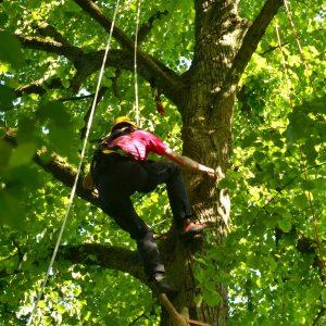 Über einen kletternden Mann hängt in einem Baum eine Glocke