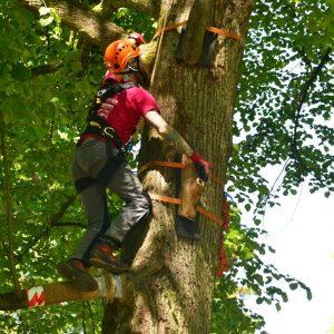 Über spezielle Haltegriffe klettert ein Mann an einem Baumstamm