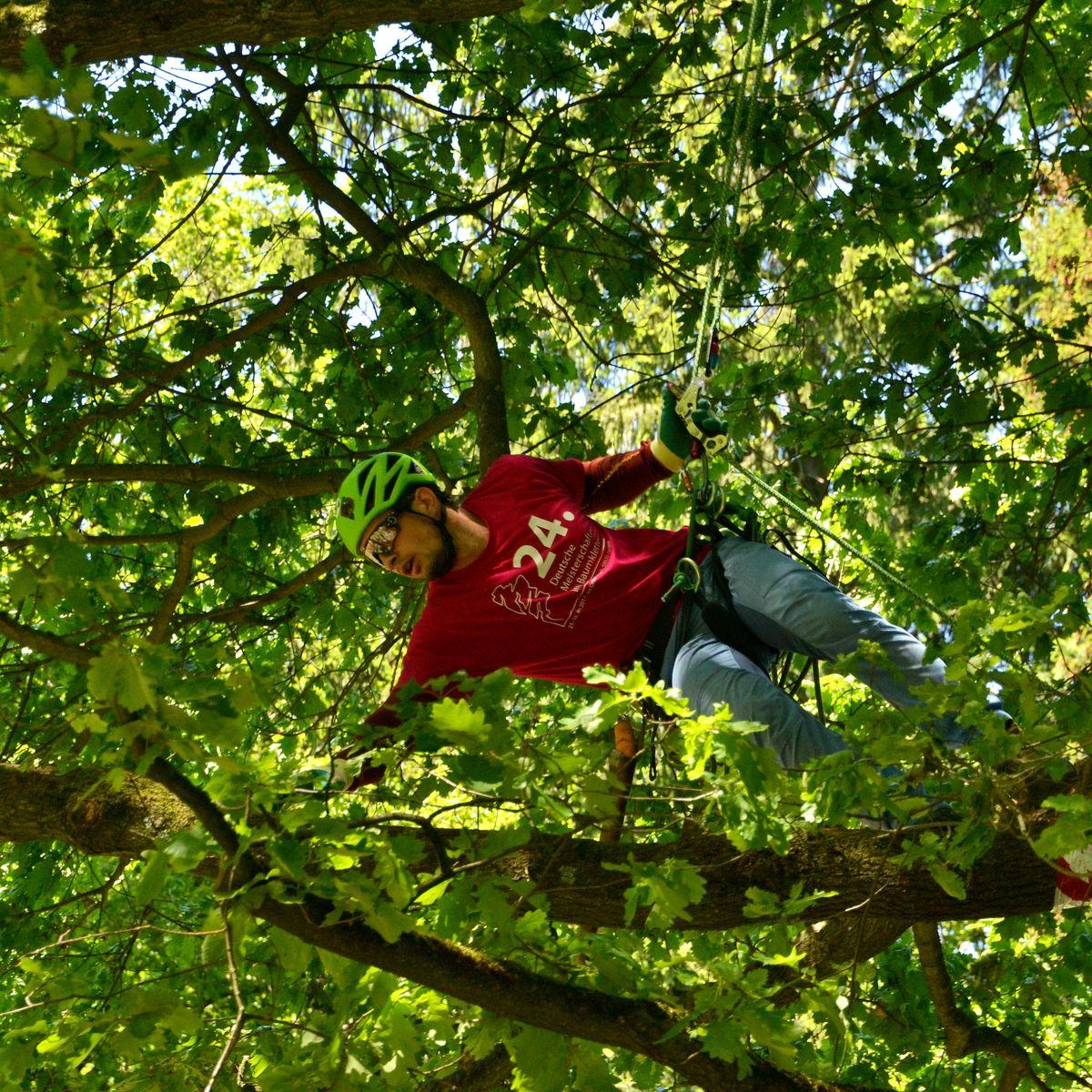 Baumkletter-Meisterschaften: Disziplin Workclimb