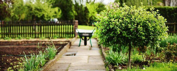 Garten mit einem Baum und einem nahen Weg