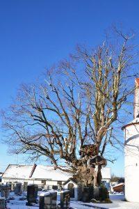 Alter schneebedeckter Baum