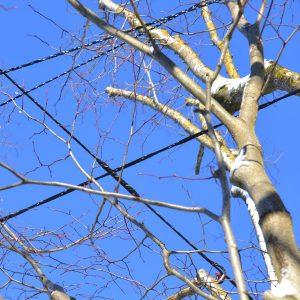 Äste eines Baumes sind mit Seilen verbunden.