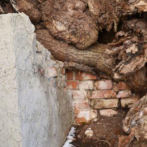 Unter den Ästen eines Baumes ist eine Mauer gebaut.