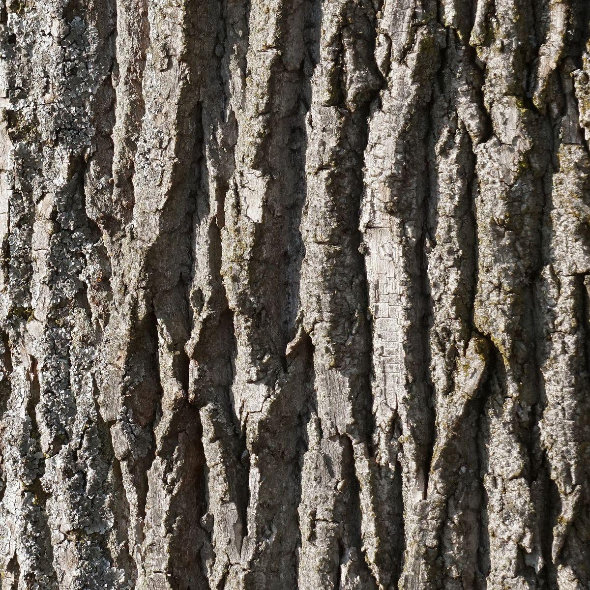 Baumrinde - Die Haut des Baumes