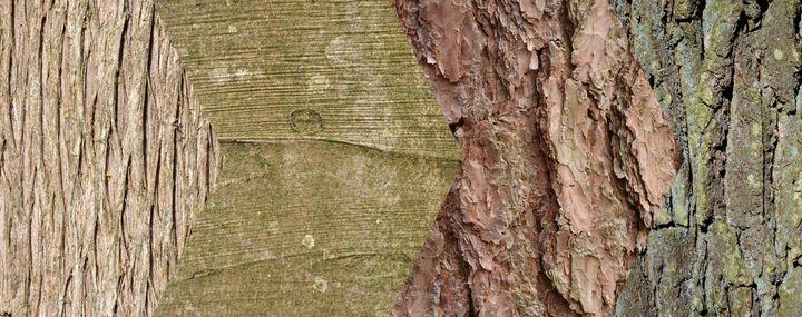 Verschiedene Baumrinden