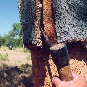 Axt löst Korkrinde vom Baum
