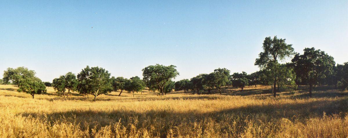 Graßlandschaft mit vereinzelten Bäume