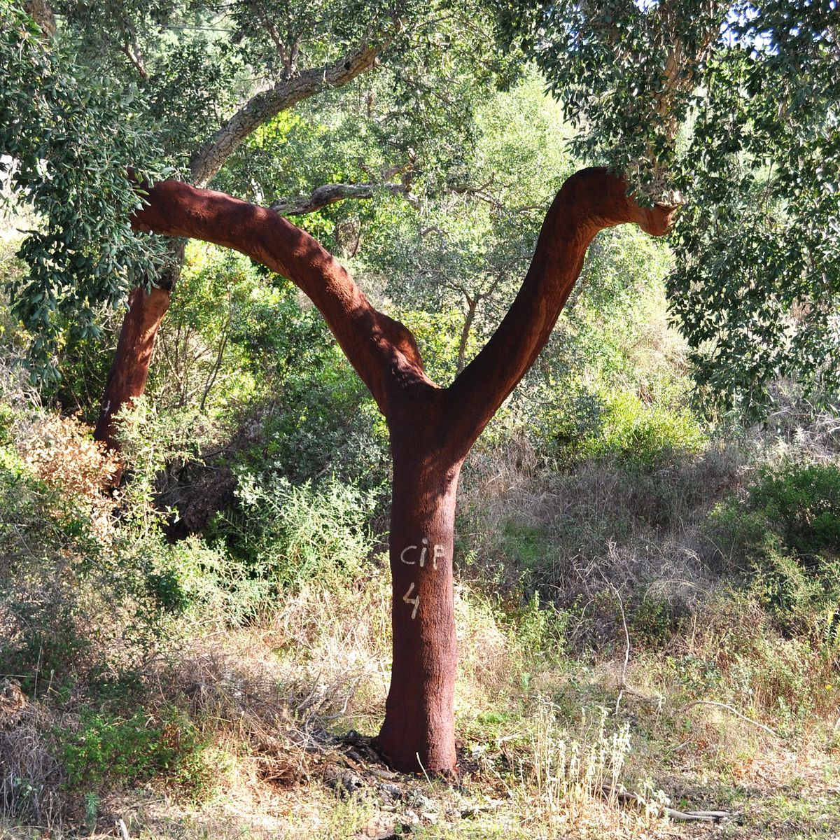 Kork – Die besondere Baumrinde