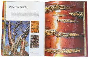 """Beispielseite aus den Buch """"Rinde"""" von Cédric Pollet"""