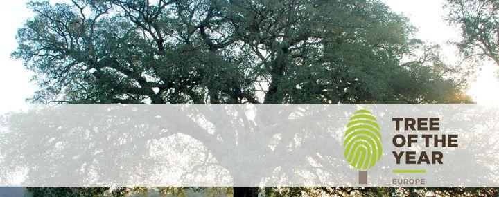 Europäischer Baum des Jahres 2018: Whistler Cork Oak