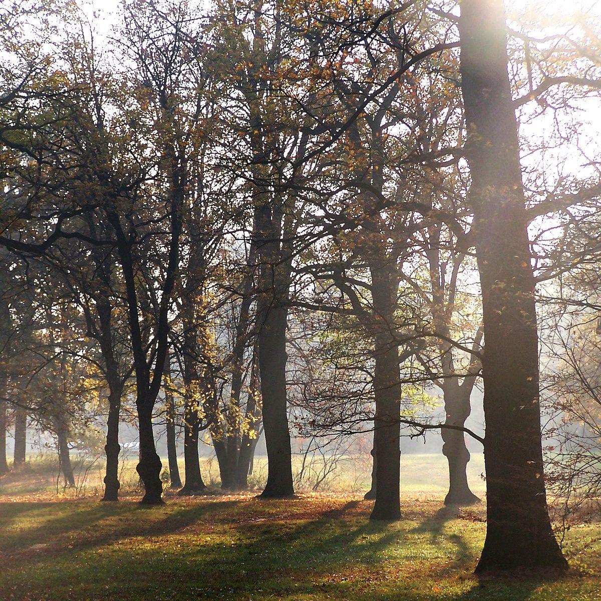 Internationaler Tag des Waldes 2018 - Bäume, Wälder und die Stadt