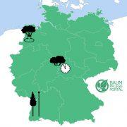 Deutschlandkarte mit drei Bäumen