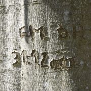 In eine Baumrinde sind Initialen und ein Datum eingeritzt