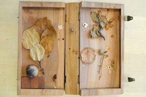 Buchförmige geöffnete Holzschachtel mit Blättern und Früchten des Holzapfels