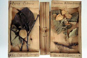 Geöffnetes Holzbuch mit Merkmalen der Quitte