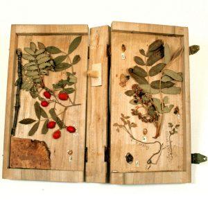 Holzbuch mit den Merkmalen der Vogelbeere