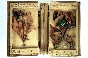 Altes Hlozbuch aus einer Xylothek mit Elementen des Zwerholunders