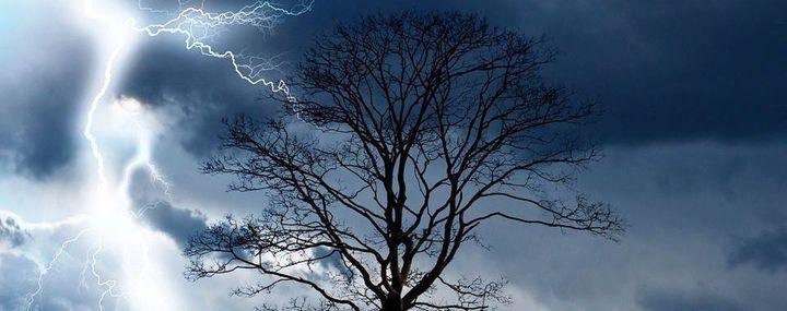 Baum und Gewitter mit Blitz