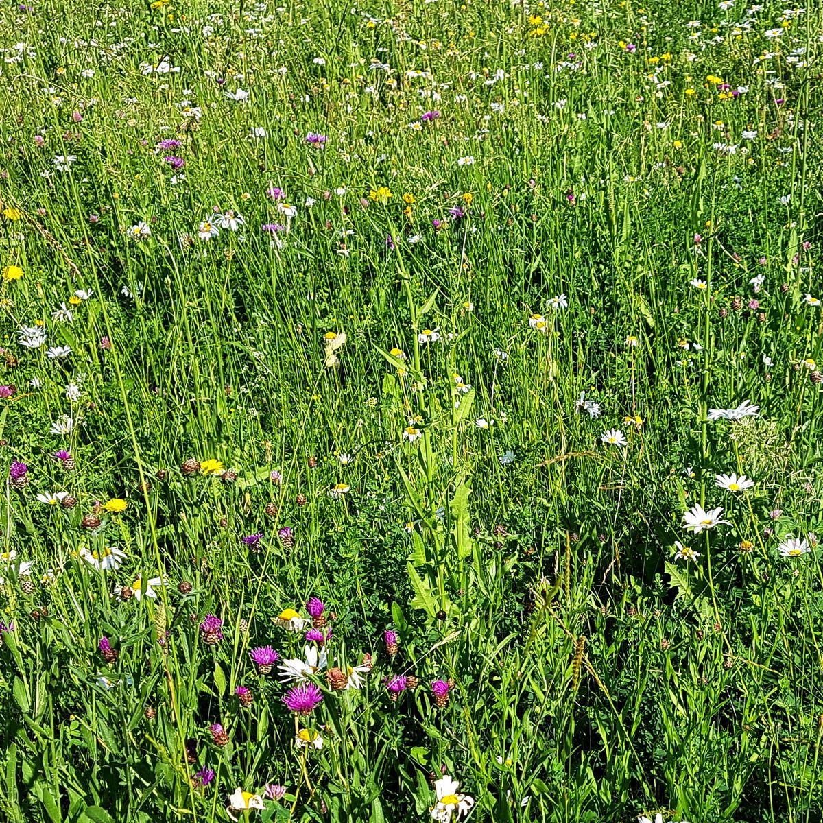 Biodiversität auf Streubstwiesen