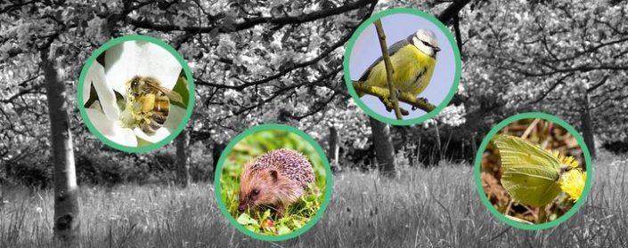 Biene, Igel, Blaumeise und Zitronenfalter auf einem Streuobstwiesen-Hintergrund