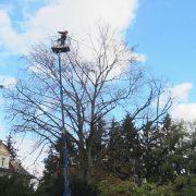 Baumpfleger auf einer ausgefahrenen Hubarbeitsbühne schneidet einen Baum